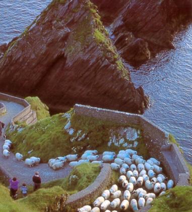 Ireland_sheep