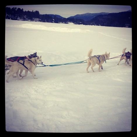 Lake Placid, dogsled