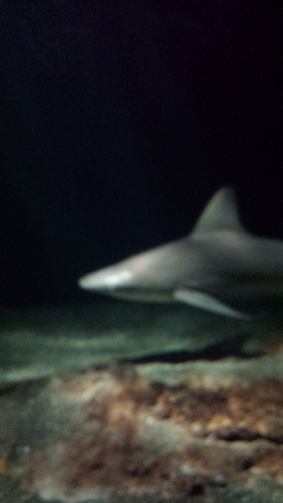 "A shark at the National Aquarium. The people working there kept trying to convince us that ""most sharks aren't dangerous to humans,"" but they couldn't fool me. I watch Shark Week."