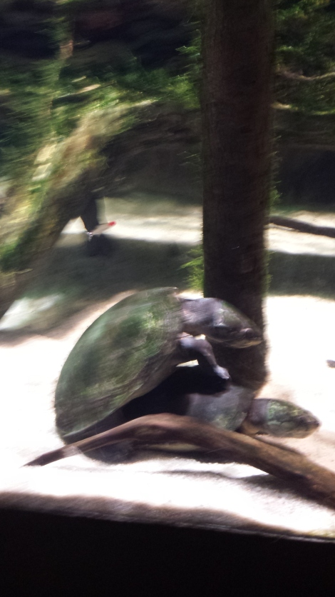 Humping turtles at the National Aquarium since I'm the height of maturity.