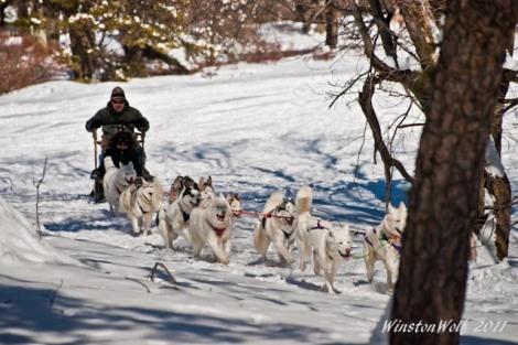Arctic Paws Dogsledding