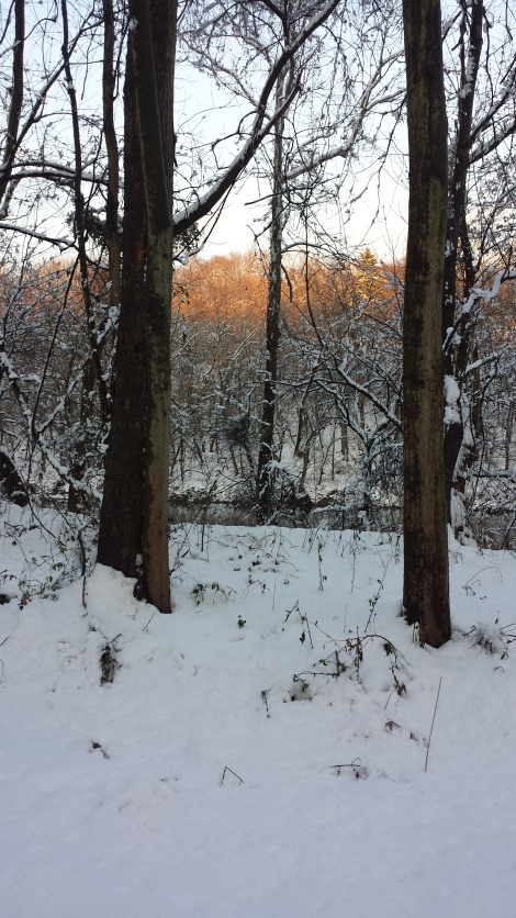 It's beginning to look a lot like Christmas and I finally found some decent XC ski trails here in Lancaster.