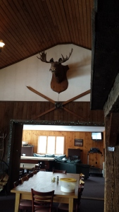 Found a moose...sort of.